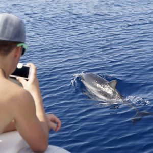 Dolphin Spotting Kayaking Tours Florida